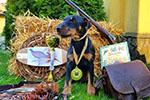 Мисливці та мисливські собаки. Вся Україна.