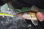 Рыбалка на Днепре и озёрах в черте Киева